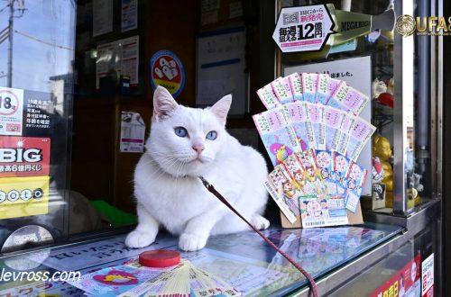 มาโกะ แมวนำโชคให้ลูกค้าลอตเตอรี